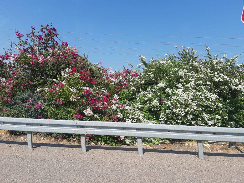 kwiaty Galilei
