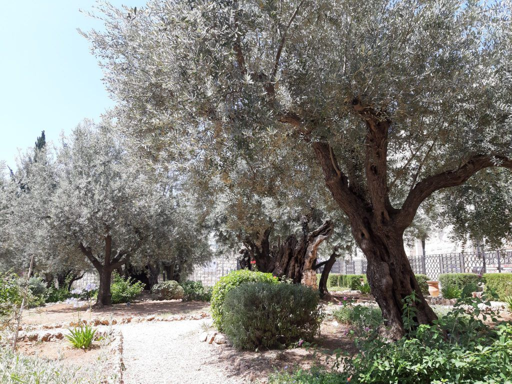 Getsemani, góra Oliwna